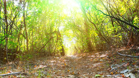 Free Forest Trail Royalty Free Stock Image - 26347596
