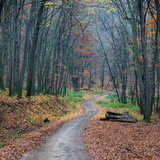 Forest trail. In autumn forest royalty free stock photo