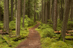 Forest Trail Royalty Free Stock Images