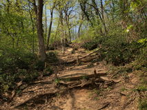 Forest Trail Imagen de archivo