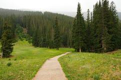 Forest Trail Imagem de Stock