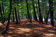 Forest Trail arkivfoto