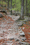 Forest Trail. Rocky path through the spring forest Royalty Free Stock Image