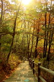 Forest Trail Foto de archivo