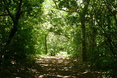 Forest trail. Trail in the forest in Costa Rica Stock Photo