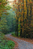 Forest trail in Autumn. Image of a forest trail in early autumn stock images