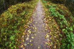 Forest trail in autumn Stock Images