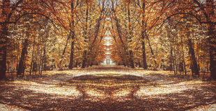Forest trail. Autumn mirror reflection Royalty Free Stock Photos
