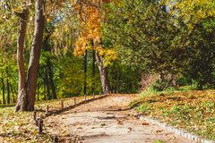 Forest trail in autumn park Stock Photo