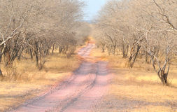 Forest trail. Beautiful view of arid forest trail at india Royalty Free Stock Image