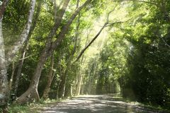 Forest trail and big green tree with sun ray. Forest trail and big green tree Stock Image