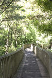 Forest trail with a bridge. Forest rail in AH Reed Memorial Park, Whangarei, New Zealand Stock Image