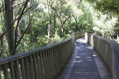Forest trail with a bridge. Forest rail in AH Reed Memorial Park, Whangarei, New Zealand Stock Photo