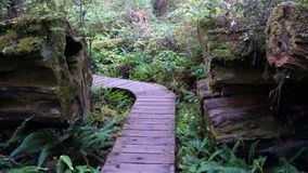 Forest trail in British Colombia Stock Photo