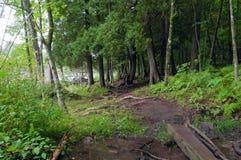 Forest Trail Crossing Stream in Jay Cooke royalty-vrije stock afbeeldingen