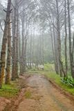 Forest trail among the deciduous and coniferous trees on a foggy Royalty Free Stock Photos