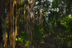 Forest trail. Deep tropical dark forest trail Stock Image