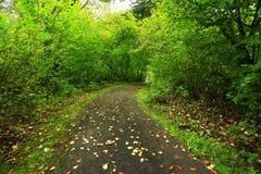 Forest Trail di nord-ovest pacifico Fotografia Stock Libera da Diritti
