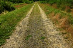 Forest Trail di nord-ovest pacifico Immagine Stock