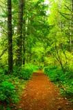 Forest Trail di nord-ovest pacifico Fotografie Stock Libere da Diritti