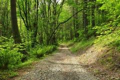 Forest Trail di nord-ovest pacifico Immagine Stock Libera da Diritti