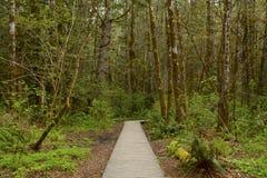 Forest Trail di nord-ovest pacifico Immagini Stock