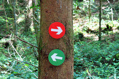 Forest trail Directions. Arrows on a tree Stock Images