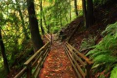 Forest Trail du nord-ouest Pacifique photo stock