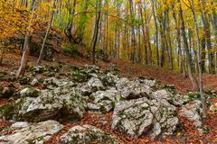 Colorful early autumn forest fallen leaves stock photography