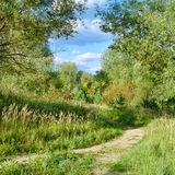Forest trail in early autumn Stock Photography