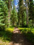 Forest Trail en Rocky Mountains photos libres de droits