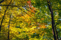Forest Trail in the Fall. Scene from trails near Seneca Rocks, West Virginia in the Fall royalty free stock photo