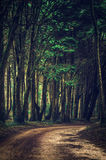 Forest Trail Royalty Free Stock Photo