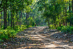 Forest trail. With foliage at corbett national park, India Stock Photos