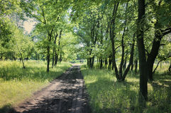 Forest trail in the forest Royalty Free Stock Photography