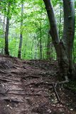 Mountains scene with green forest, pathway and big roots of tree stock photography
