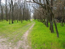 Forest trail among green grass and tall trees. In spring day Royalty Free Stock Photos