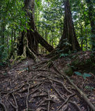 Forest trail in Guadeloupe Stock Photo