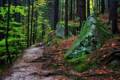 Forest Trail i bergen Royaltyfria Foton