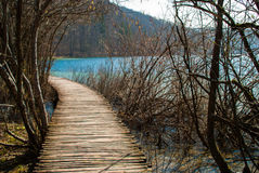 Forest trail. I natural park Plitvice, Croatia Stock Images
