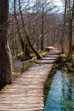 Forest trail. I natural park Plitvice, Croatia Royalty Free Stock Image