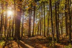 Forest Trail i nedgång Royaltyfri Bild