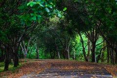 Forest Trail im Fall lizenzfreie stockfotografie
