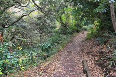 Forest trail in Japan. Japan hiking trail. Kamakura forest hike - Tenen trail between Zuisenji and Kenchoji temples Stock Photography