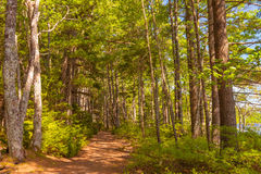 Forest Trail Stock Images