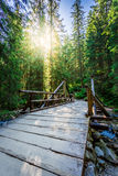 Forest trail leading over a bridge in sunny day Royalty Free Stock Photography