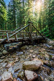 Forest trail leading over a bridge in sunny day Stock Photos