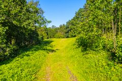 A forest trail leading to a large spacious glade against the background of tall deciduous trees stock photos