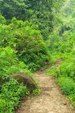 Forest Trail in Madakaripura Waterfall Area Stock Photography