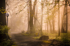 Forest trail in the morning. Forest paths on a summer morning Royalty Free Stock Image